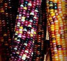 Indian Corn by vigor