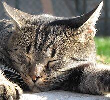 Cat Dreams by branko stanic