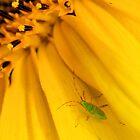 Green Monster by AwaisYaqub