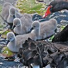 Black swan protecting babies by Cheryl Sterkenburg
