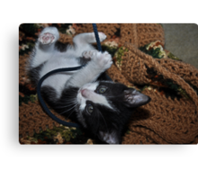 """"""" What String """" Canvas Print"""