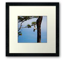 Red Shouldered Hawk Fly By Framed Print