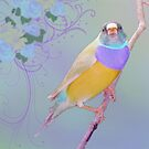 Lady Gouldian by sunshine0