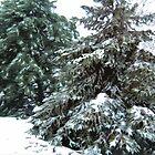 Winter's Blanket © by Dawn M. Becker