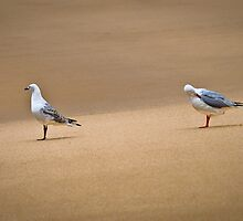 Mr and Mrs C Gull by Graeme Skinns