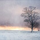 Winter Sunrise, Wramplingham, Norfolk by DaveTurner