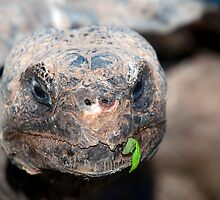 Turtle Face by imagetj