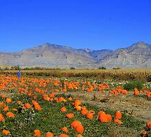 the Pumpkin Patch by sgarrityphotogr
