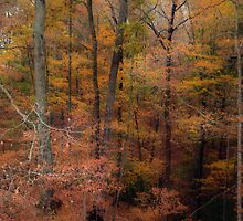 Reminiscing on October by Virginia Shutters