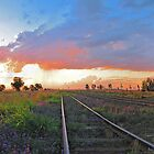Malu Station, Darling Downs, Queensland by Robert Ashdown