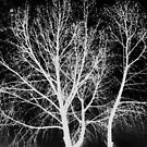 Ghost Trees by Maggie Hegarty