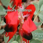 Sturt Desert Pea,Season's Greetings from Adelaide,S.A. by elphonline