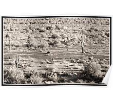 cactus desert arizona Poster