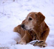 Snow dog by LadyFi