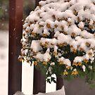 New snow by MarieG