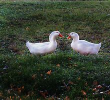 Waddling Ducks by Sharon Batdorf