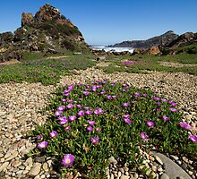 Pigface and Pebbles by Ian Robertson