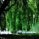 Whispering Willow by CA Almeida