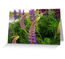 curly lupin Greeting Card