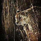 Camouflage by KatsEyePhoto