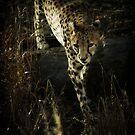 Stalking by KatsEyePhoto