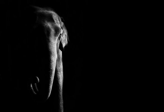 Elephant by KatsEyePhoto