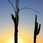 Arizona Sunset by Candy Gemmill