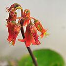 Succelent flower by samhicks