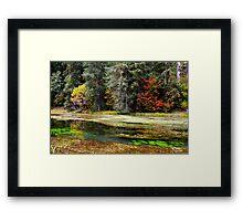 autumn spring Framed Print