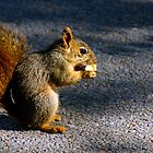 Squirrel stops to nibble by agenttomcat
