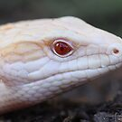 Albino Blue Tongue by Steve Bullock