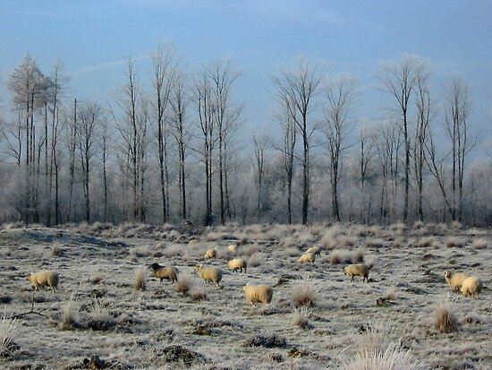 Sheep in Frozen Heatherfield by ienemien
