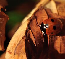 Ladybird on a chestnut leaf by Christopher Cullen