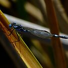 Damsel at the Dam by Rick Playle