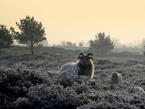 Sheep In a Frozen world by ienemien