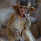 Big Ears  by Anne Young