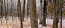 First Snow - Dunrobin Ontario by Debbie Pinard