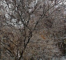 After the Freezing Rain 5 - Lilac Tree by Debbie Pinard
