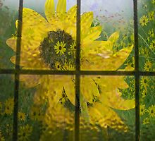 Beauty Through The Window by Pat Moore