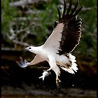 Sea Eagle 101 by John Van-Den-Broeke