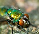 Fly - Closeup V by kutayk