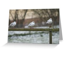 Seagulls Getting Ready for a Cold Night Ahead Greeting Card