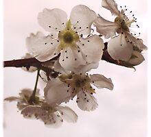 Bloeisels -perskeboom by Rina Greeff