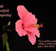 Comfort series: Isa. 66:13 by hummingbirds