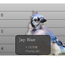 Another Jail Bird Photographic Print