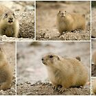 Prairie Dogs Collage by Angela Pritchard