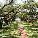 oak alley by elh52