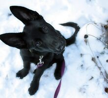 Etta in the Snow by Megan Noble