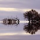 """""""Reflections"""" by Sue  Fellows"""