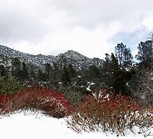 First Snowfall in the Sierras by Corri Gryting Gutzman